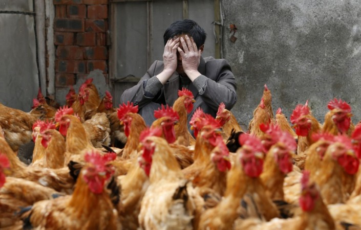 Nightmare vision: Spectre of deadly bird flu returns in China