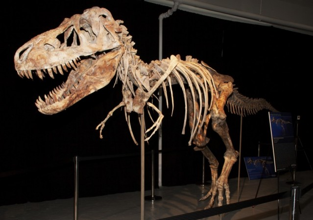 Dinosaur [Representational Image]