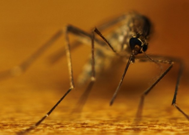 Scientists Discover Rare Mosquito Fossil Belly Full of Dried Blood Intact