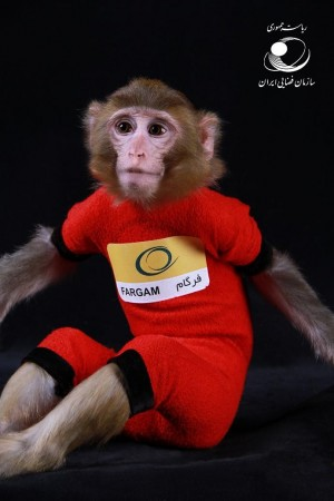 Iran's Second Monkey Who Went to Space