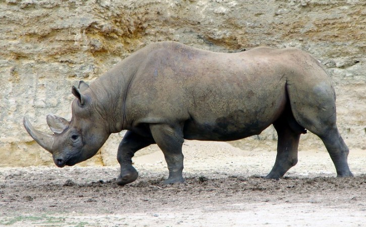 Species Becoming Extinct Faster than Before: Study Finds