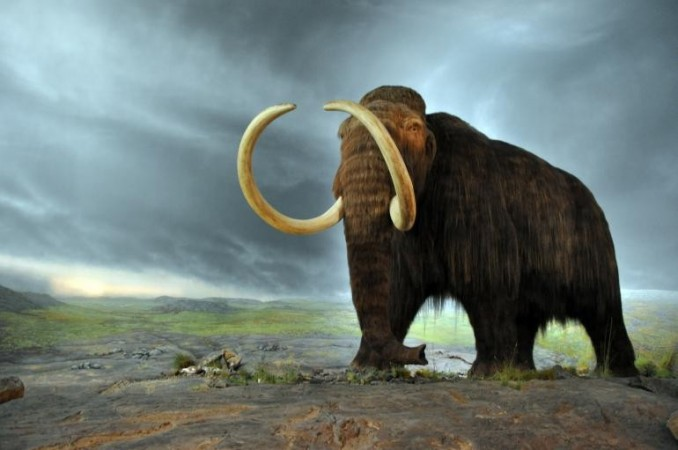 Ancient Elephant-like Fossil Discovered in New Mexico (Representational Image)