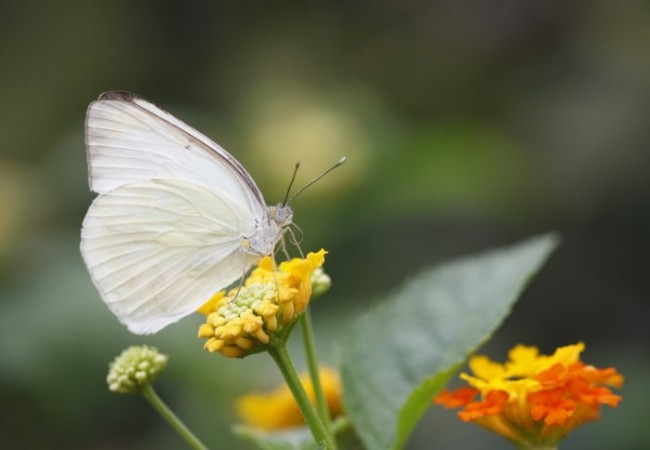 Light-Colored Insects Adapt to Warming Climate Better than Dark-Colored Ones