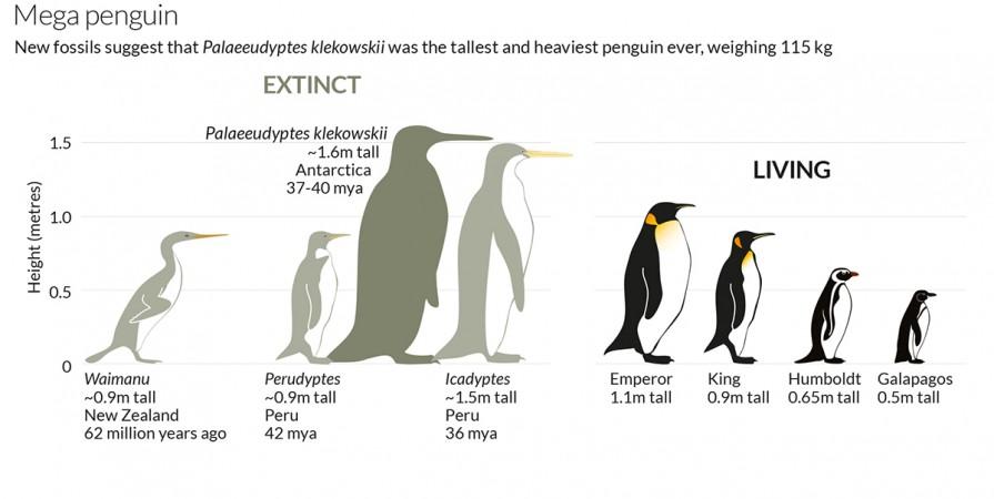 prehistoric penguin