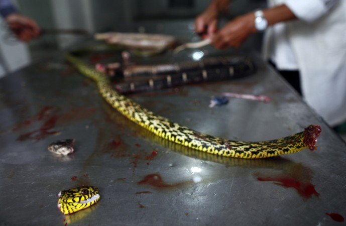 A chef was killed in China after the cobra head, he severed 20 minutes ago, bit his hand.