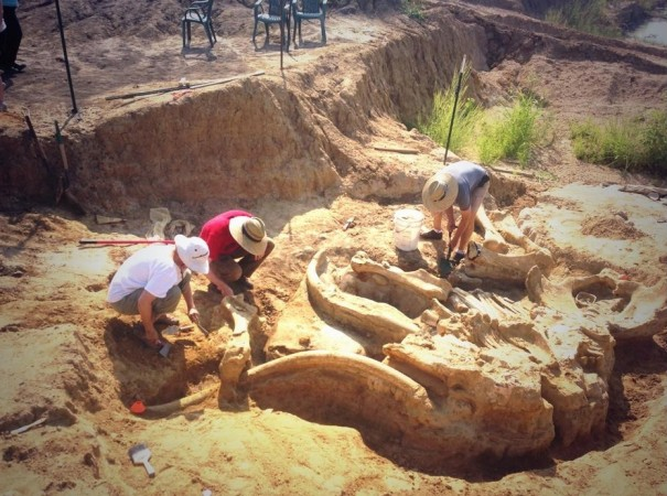 Unearthing mammoth skeleton from the McEwen's land