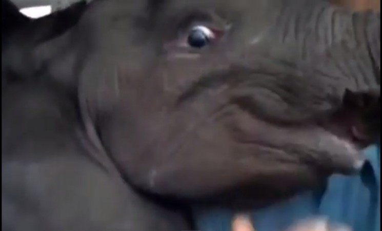 Baby Elephant flies in a Small Aircraft