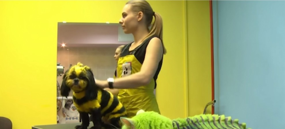 Green Dragon Cat and Bumblebee Dog: Pets with Different Looks in Russia