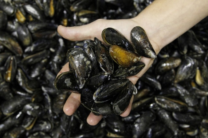 Most Dangerous Alien Species: Toxic Mussels found in Britain's Wetlands