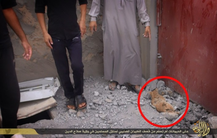 An ISIS Media picture shows a dead cat following the US lead coalition airstrike in ISIS-held areas of Salahuddin province in Iraq.