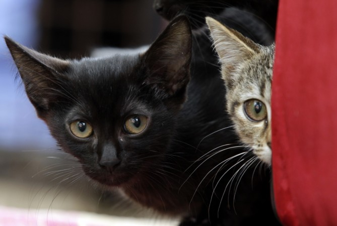 Cats smuggled from China to Vietnam