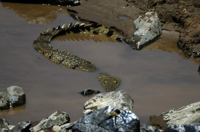 Man fights crocodile to avenge his wife