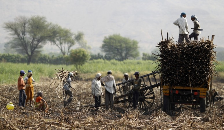 Sugarcane farmers in Maharashtra, India