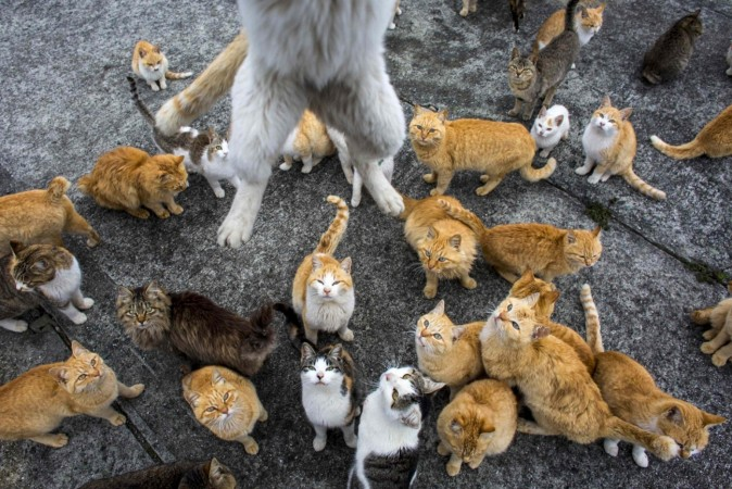 Japanese Aoshima island overrun by cats