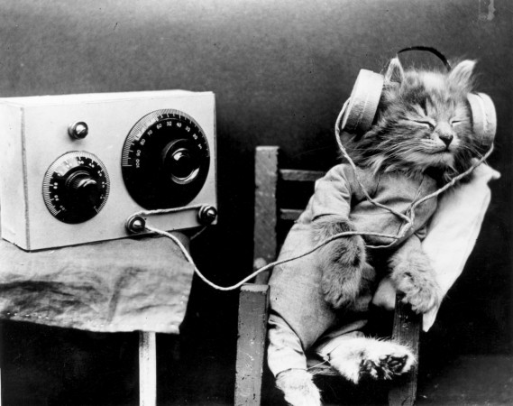 Composer creates music just for cats and they love it - listen here