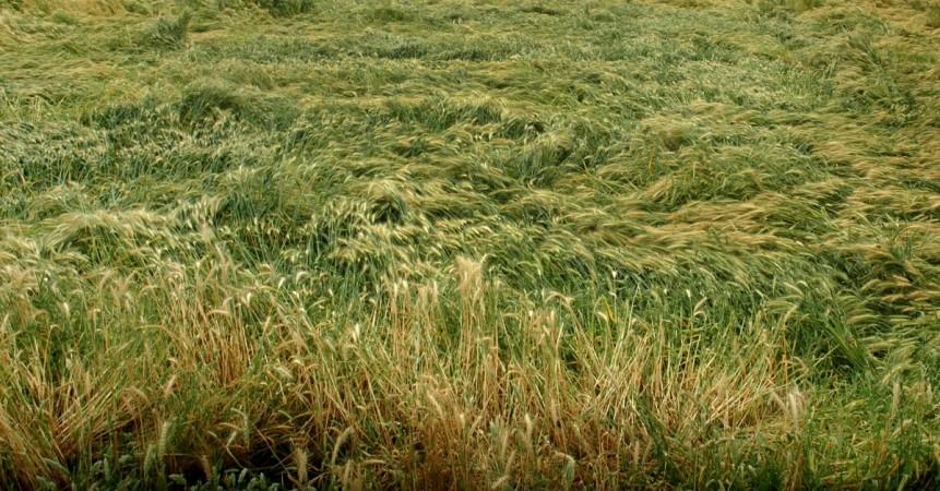 crop damage farmer