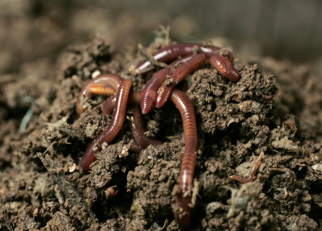 Earthworms rain down from skies over Norway