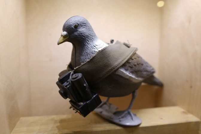 A pigeon mock-up is seen with a small camera at the 'Top Secret' Spy Museum in Oberhausen, Germany.