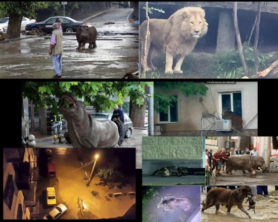 At least 30 dangerous animals are said to be free following the flooding in Tbilisi.