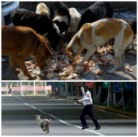 Stray Dog Menace in Kerala
