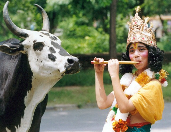 Cow meat gujarat quran