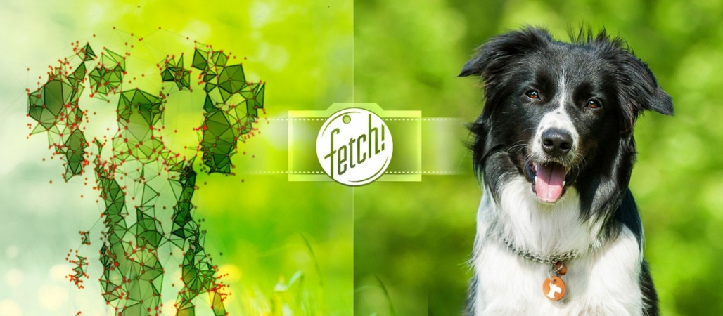 Find out a dog's breed using Microsoft Fetch app for iPhones