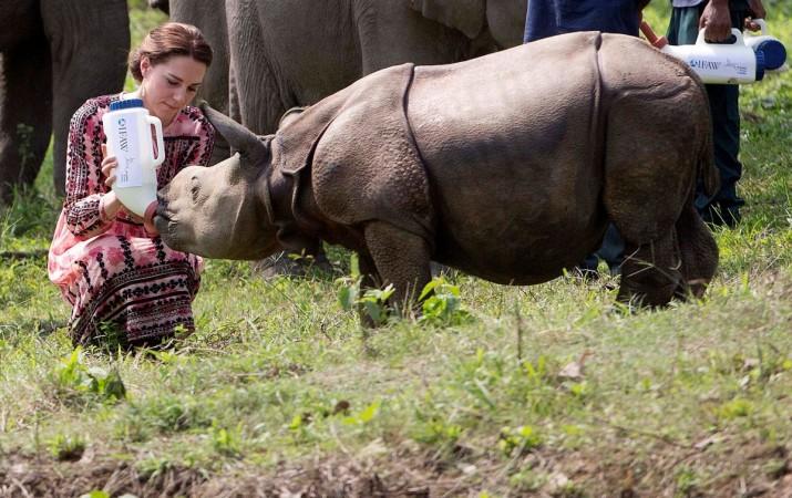 Kate Middleton feeding a baby rhino