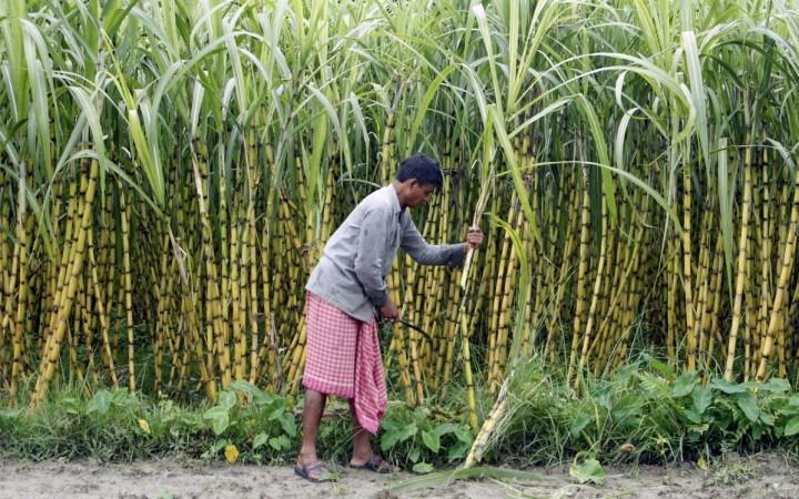 sugar india sugar crushing isma