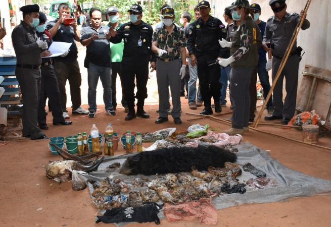 Dead tiger cubs are displayed by Thai officials after they were found during a raid on the controversial Tiger Temple