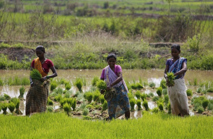 rice paddy msp modi government kharif season crops food inflation