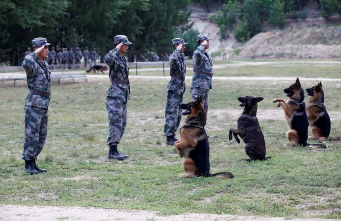 Soldiers salute as they perform with their dogs