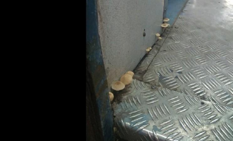 Mushrooms inside Indian train