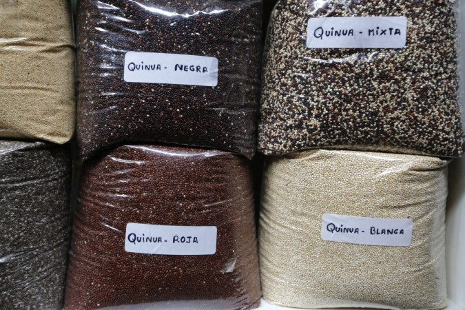 Varieties of quinoa