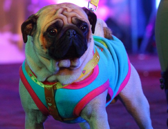 Diwali 2016: How to keep dogs, cats stress-free this festive season