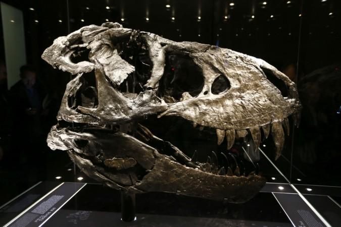 dinosaur skull fossil