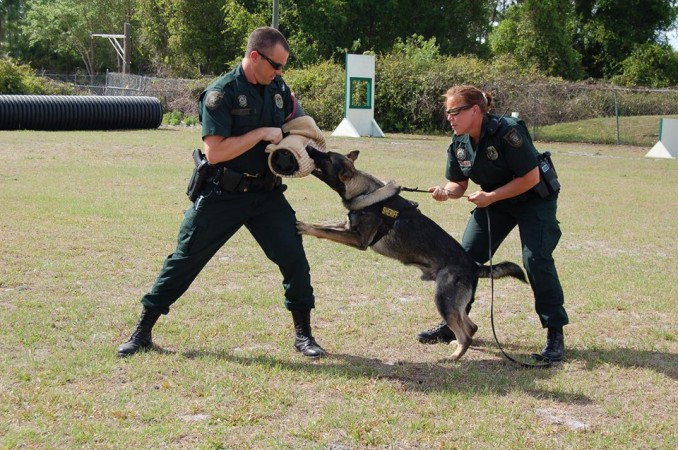 Sheriff's Office K-9 killed while tracking down fugitive