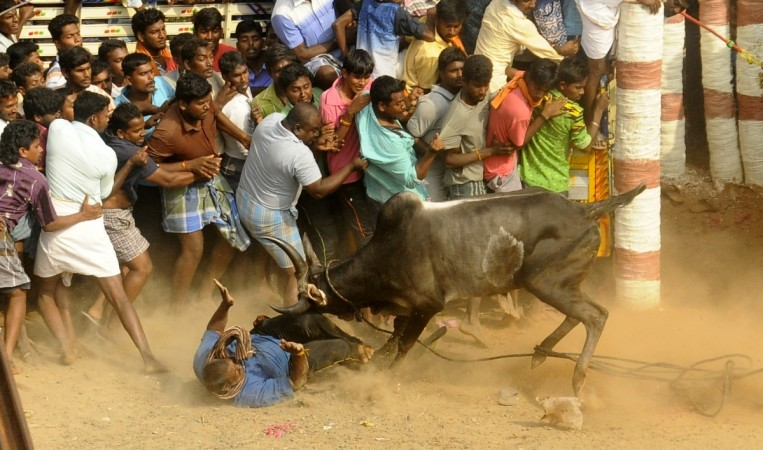 Lawrence allots 1 cr for jallikattu protesters