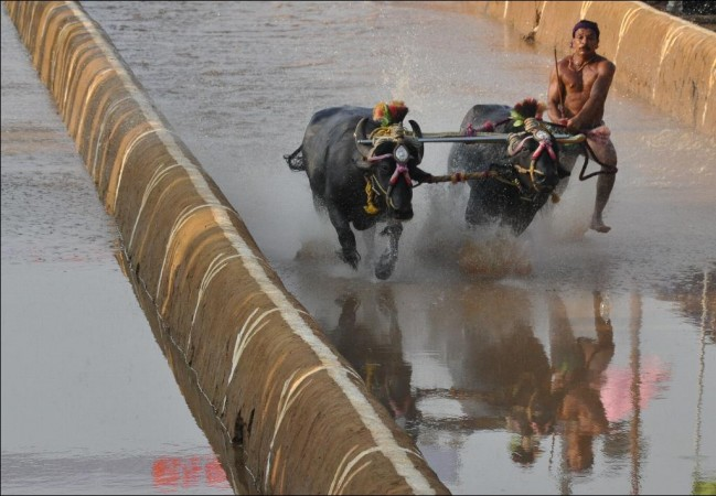 Kambala Bill passed in Karnataka Assembly