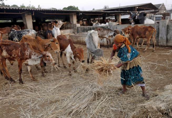 Meghalaya: Leaders who quit the BJP set to host beef festival