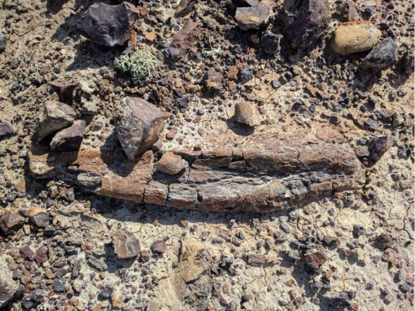 """Dinosaur fossils believed to be """"weird rocks"""" discovered ..."""