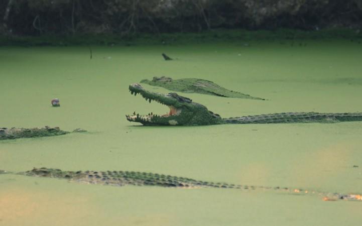 Men stranded near crocodiles for 5 days