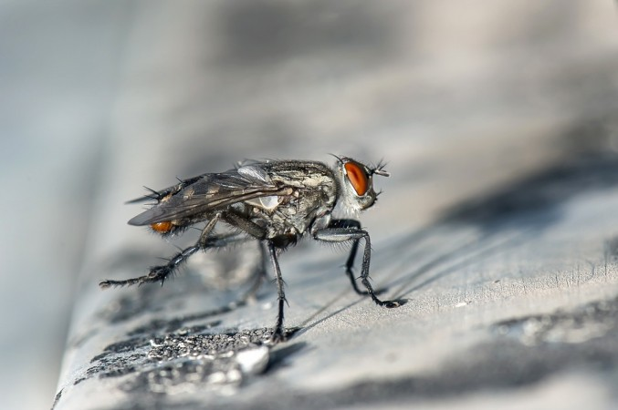 Flies may be far more risky than we first thought