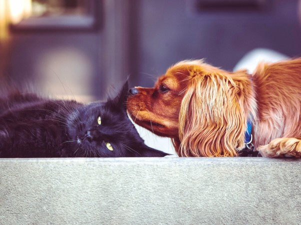 New Study Finds Dogs Are Brainier Than Cats