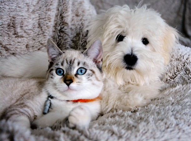 Dogs are believed to have about 530 million cortical neurons while cats have about 250