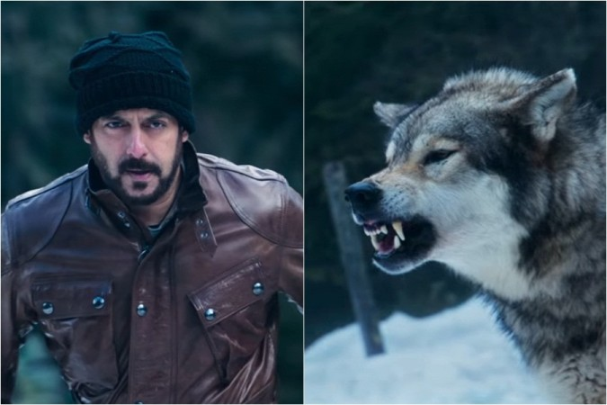 Salman Khan's deadly face-off with a wolf in Tiger Zinda Hai