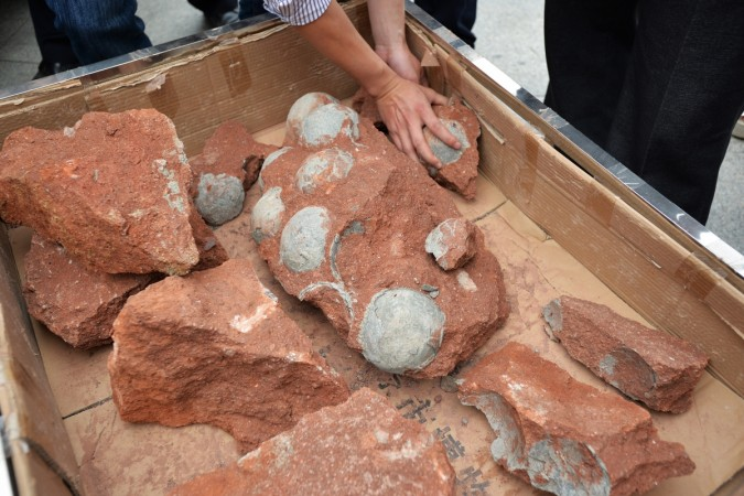 India's Jurassic Park: Dinosaur egg discovered in Gujarat's Balasinor - IBTimes India