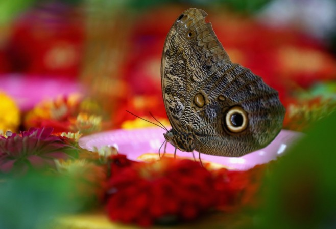 Butterflies and Moths May Have Predated Flowers