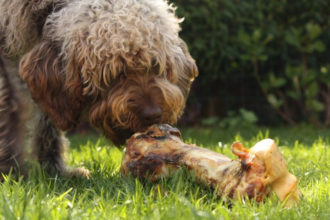 You shouldn't feed your dog raw meat. This is why