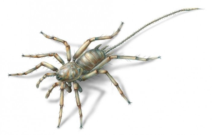 Ancient spider-like creature
