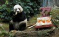Giant panda Jia Jia eats beside a birthday cake made from ice and vegetables as she celebrates her 37-year-old birthday at the Hong Kong Ocean Park, China, July 28, 2015.